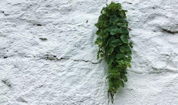 灯台の白壁と葉